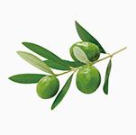オリーブ油*3