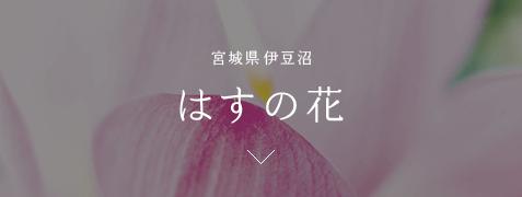 宮城県伊豆沼 はすの花